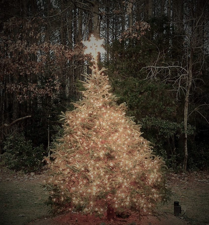 tree-lighting-12-15-16-8